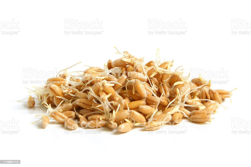 Wheat germs royalty-free stock photo