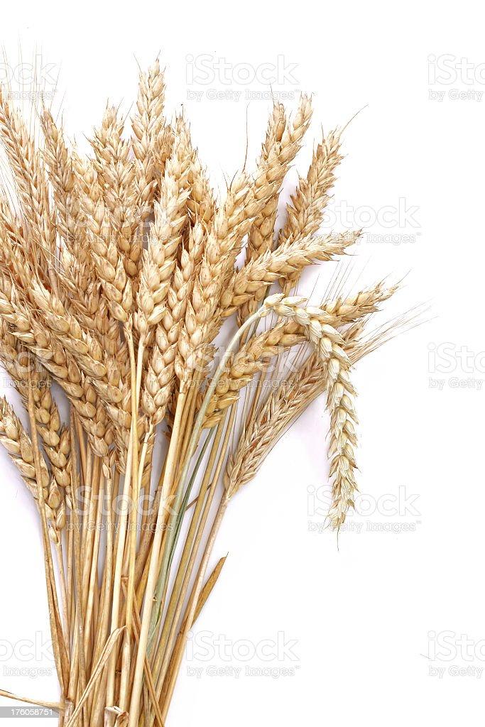 Wheat gold stock photo
