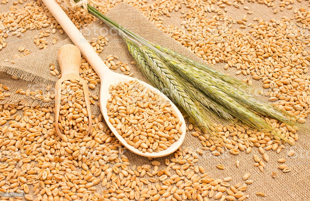 wheat grain on canvas close up royalty-free stock photo
