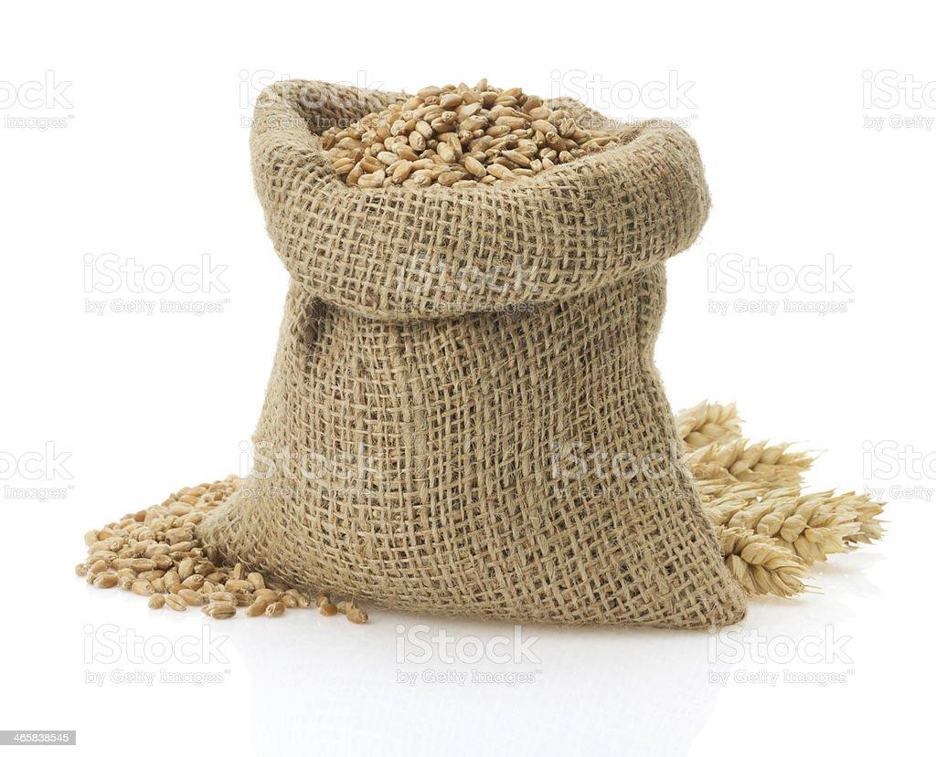 wheat grain on white stock photo