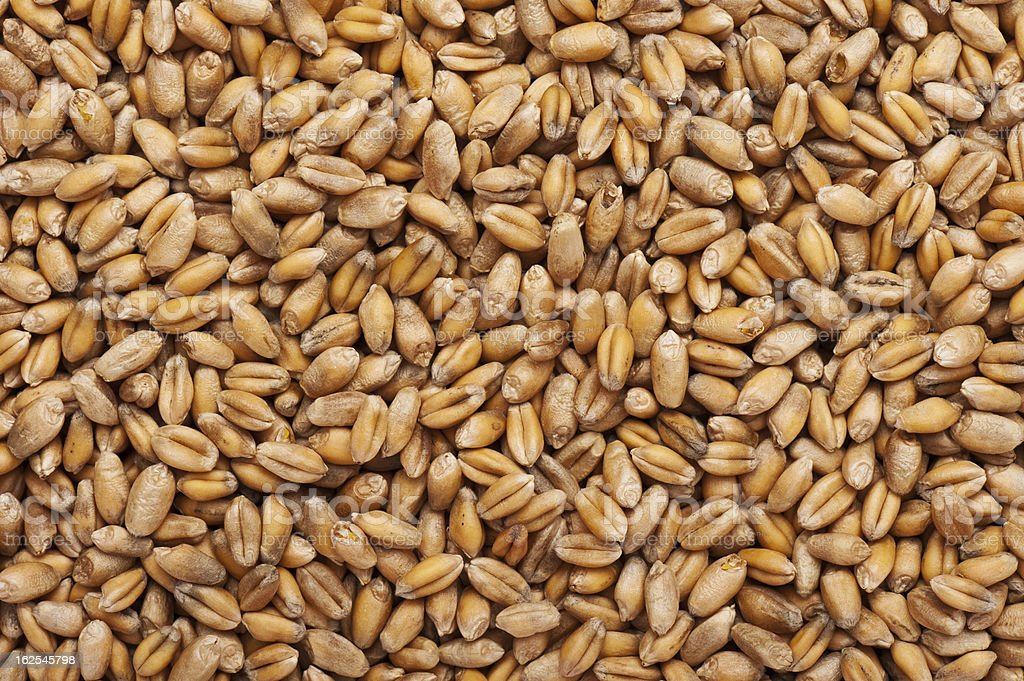 Wheat Grains Background stock photo