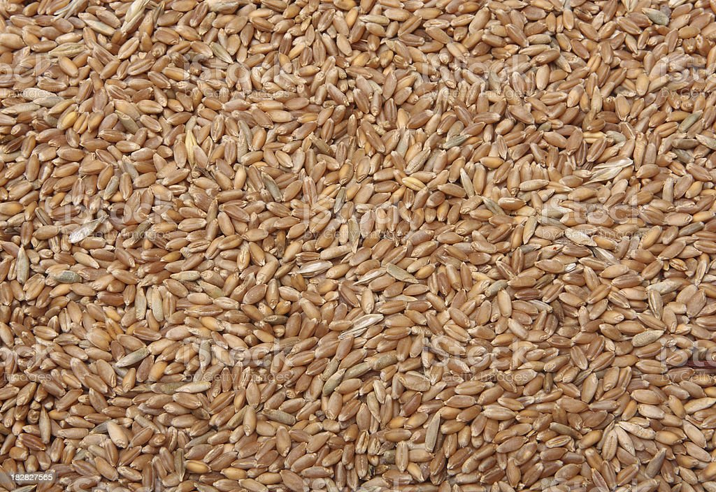 wheat grains background royalty-free stock photo