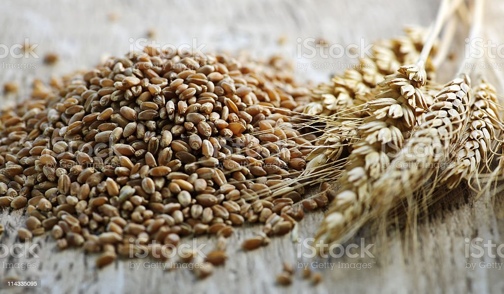 Wheat grains next to whole wheat kernels stock photo