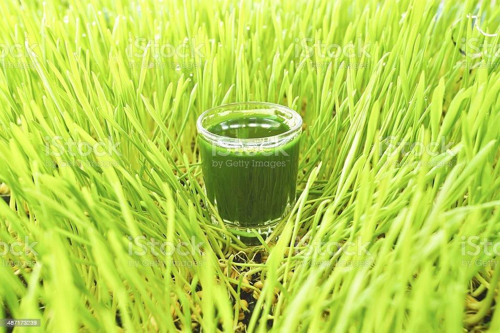 wheat grass juice stock photo