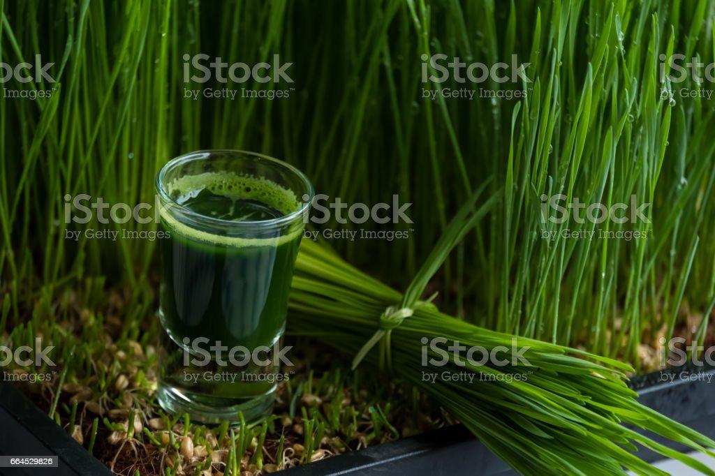 Wheat grass juice royalty-free stock photo