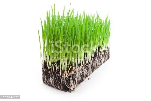 istock wheat grass 477439977