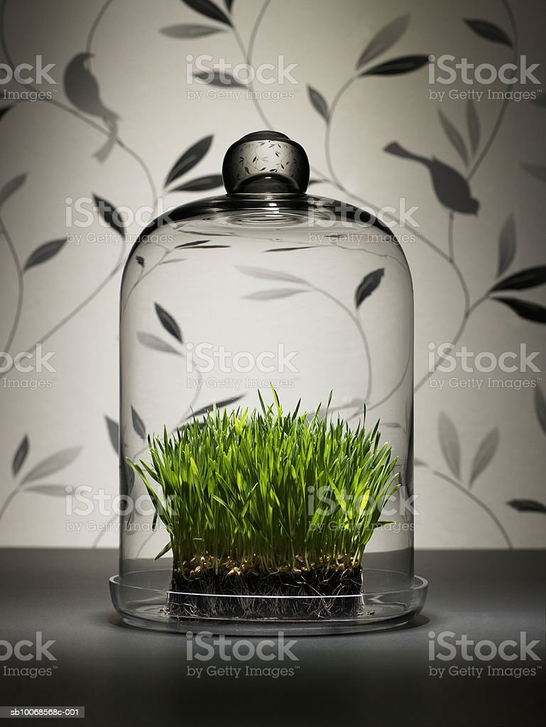 Wheat grass under glass dome royalty free stockfoto