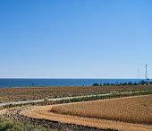 Wheat grows in a field on a farm, crop