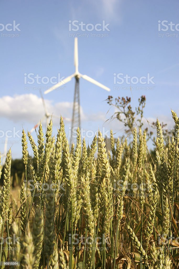 Wheat in front of a windmill royalty-free stock photo