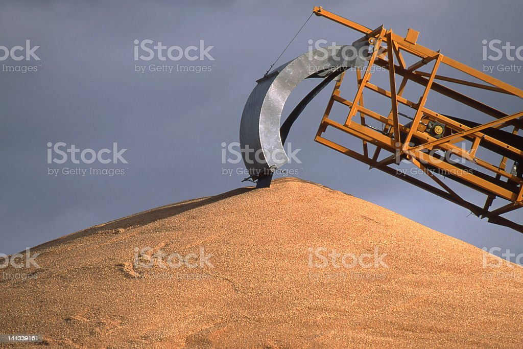 Wheat in Western Australia stock photo