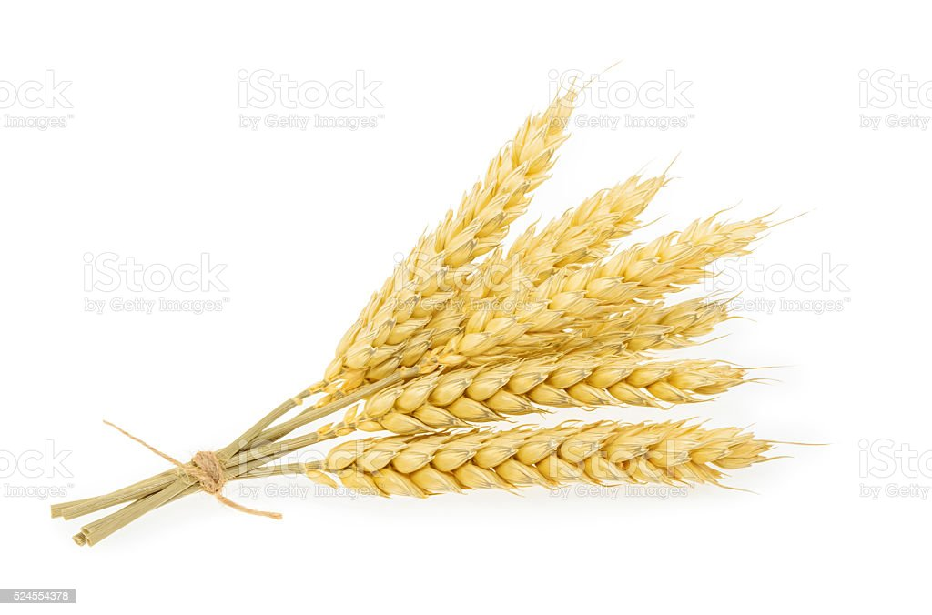 Wheat isolated on white. stock photo