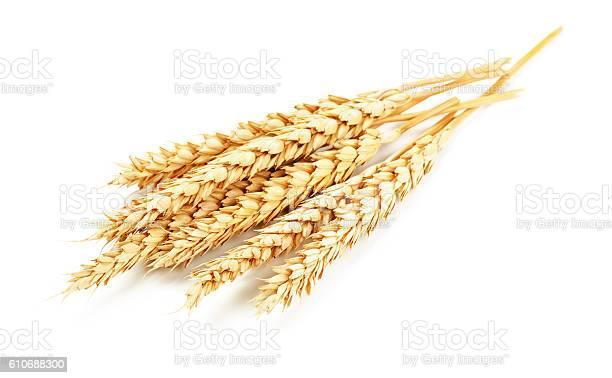 Wheat isolated picture id610688300?b=1&k=6&m=610688300&s=612x612&h=nsrrqgzgjniltrvzmx4xry vjxtzbsd9pmb2subv2fa=