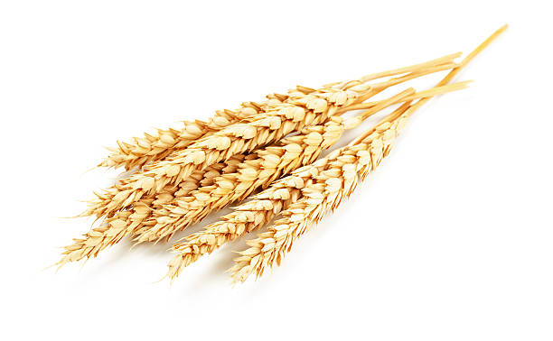 Wheat isolated Wheat isolated on white background spelt stock pictures, royalty-free photos & images