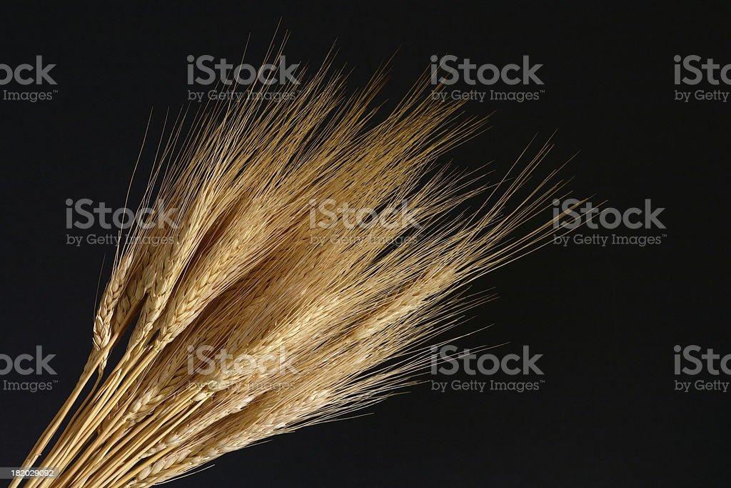 Wheat on black royalty-free stock photo