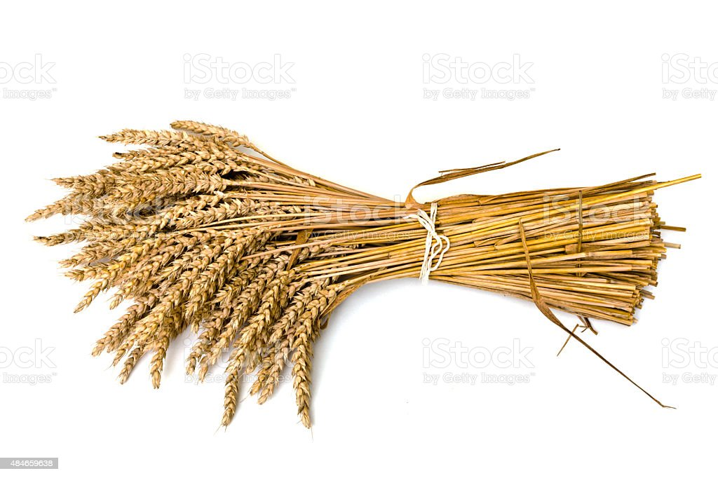 wheat on the white stock photo