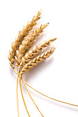 Detail of golden wheat stems isolated on white background with dropped shadow. Studio shot. Nikon D300.