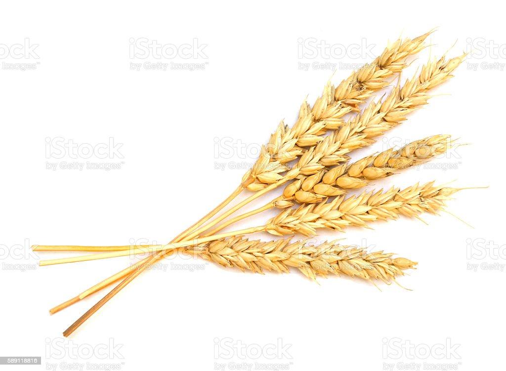wheat on white stock photo