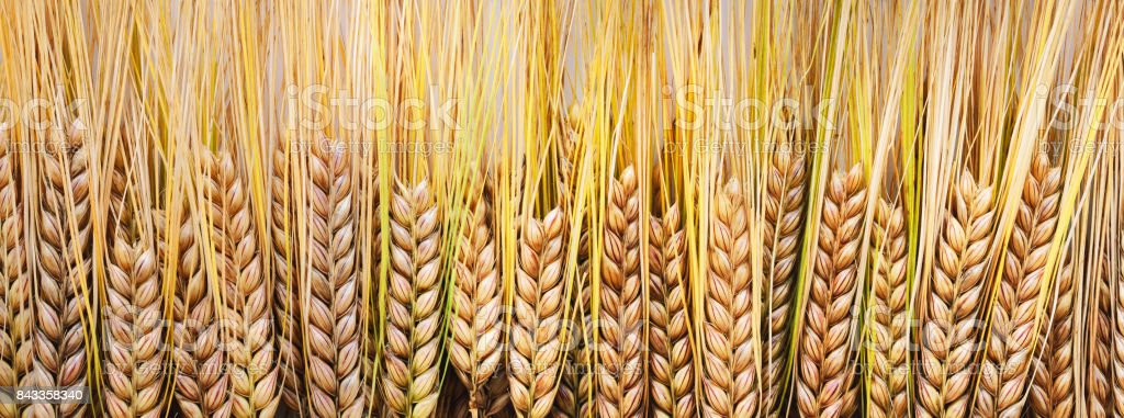 Wheat on wooden boards. stock photo