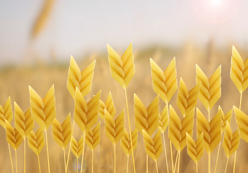 symbolic field made from wheat shaped pastas