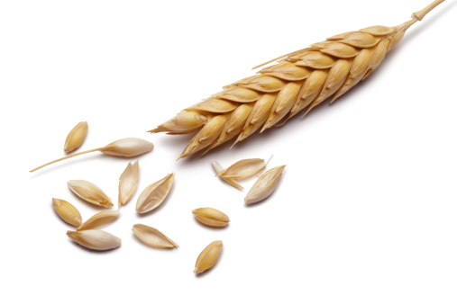 Wheat stems with seeds,on white background.