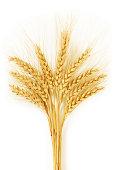 Ears of Wheat in fields