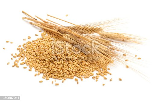 Wheat steams and grain isolated on white.
