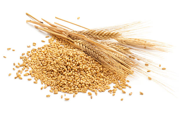 Wheat. Wheat steams and grain isolated on white. spelt stock pictures, royalty-free photos & images