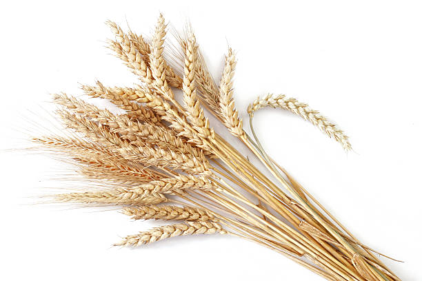 Wheat http://www.avalonstudio.eu/careal2.jpg  spelt stock pictures, royalty-free photos & images