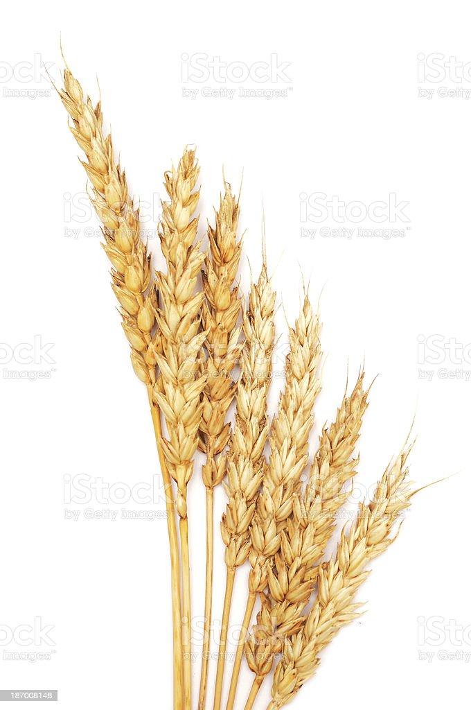 wheat royalty-free stock photo