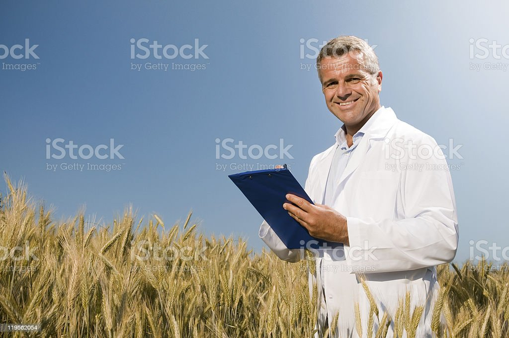 Wheat quality control stock photo