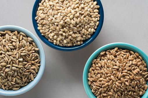 Wheat, Rye, and Barley
