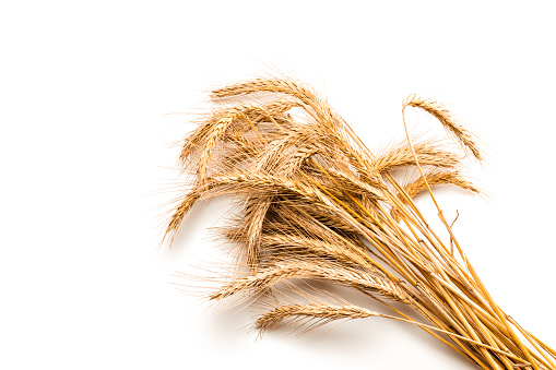 Wheat rye barley oat seeds. Whole, barley, harvest wheat sprouts. Wheat grain ear or rye spike plant isolated on white background, for cereal bread flour. Top view, cutout