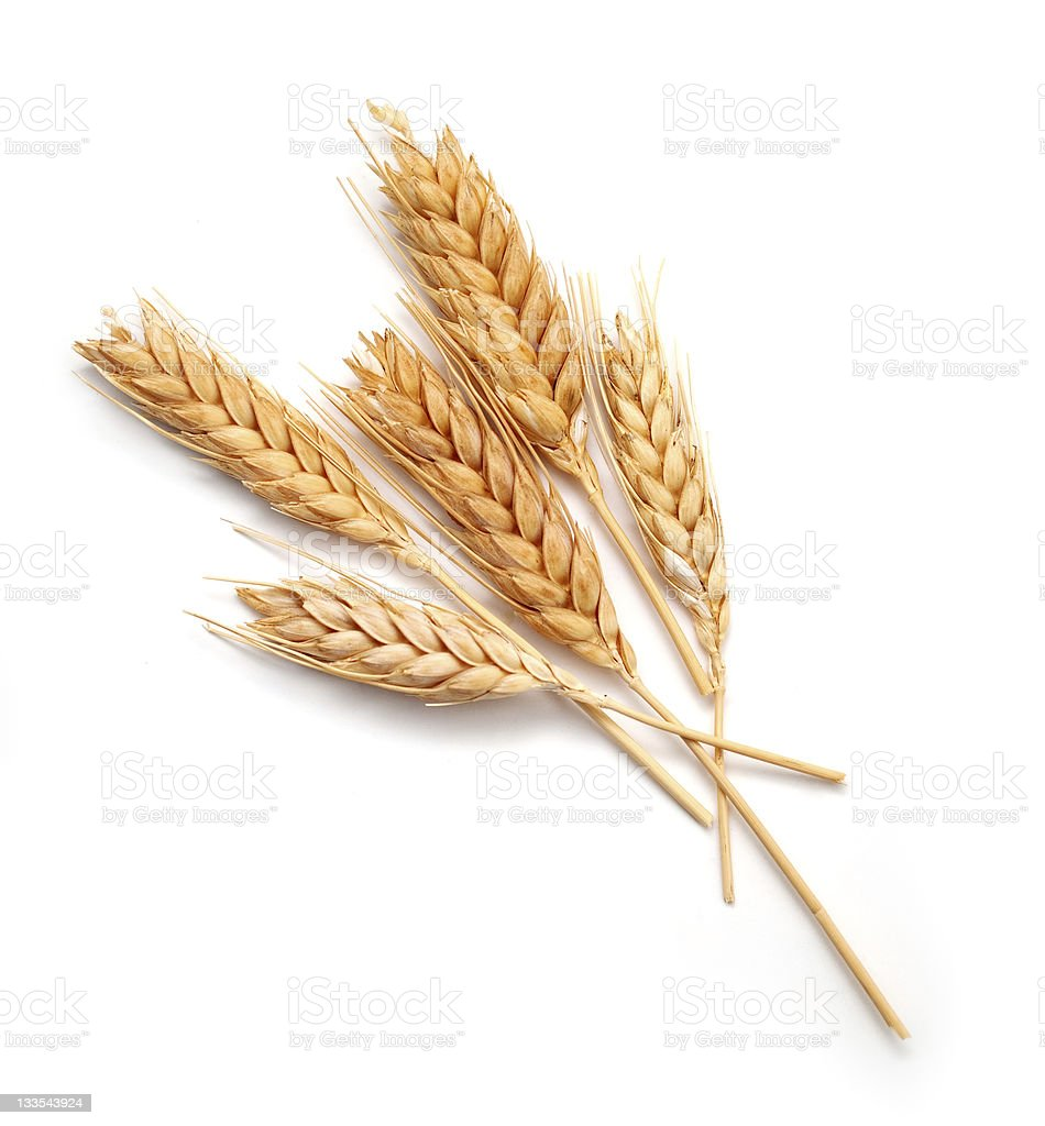 Wheat seed heads isolated on white background stock photo