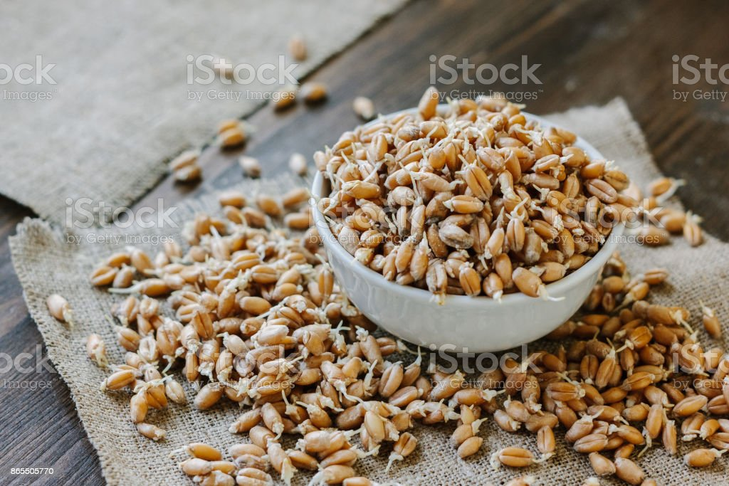 wheat sprouts in a white ceramic bowl standing on piece of fabric material. stock photo
