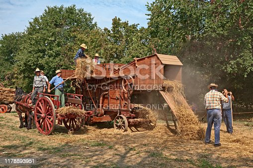 farmers re-enacting the old farm works with an ancient threshing machine and a horse-drawn cart loaded with ears of corn during the country fair Wheat Festival on August 25, 2019 in Bastia, Ravenna, Italy