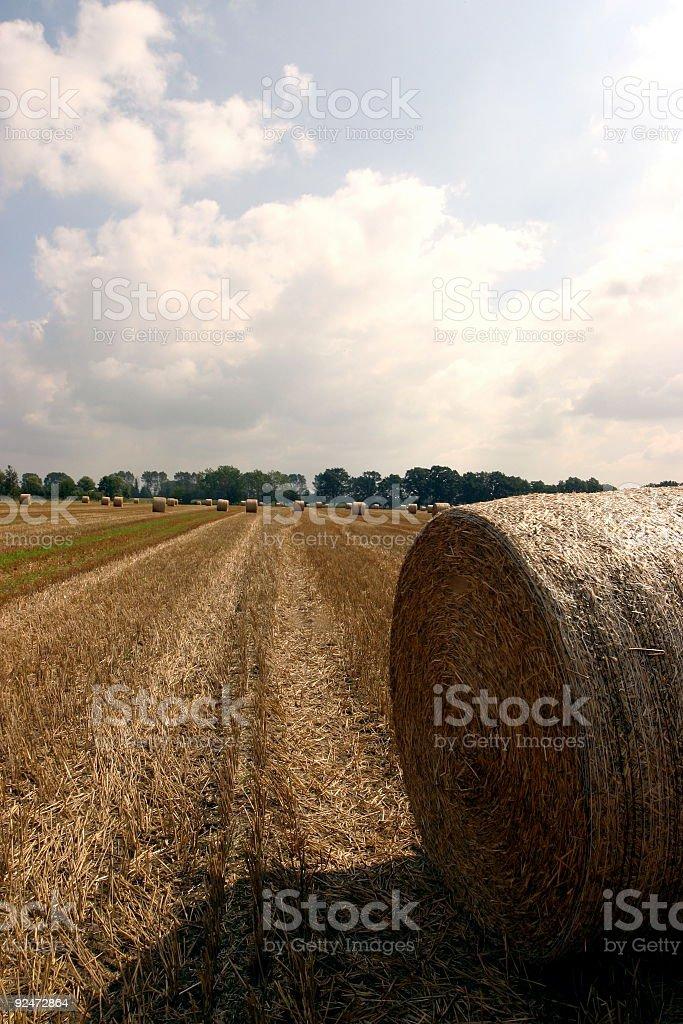 wheat_farm royalty-free stock photo