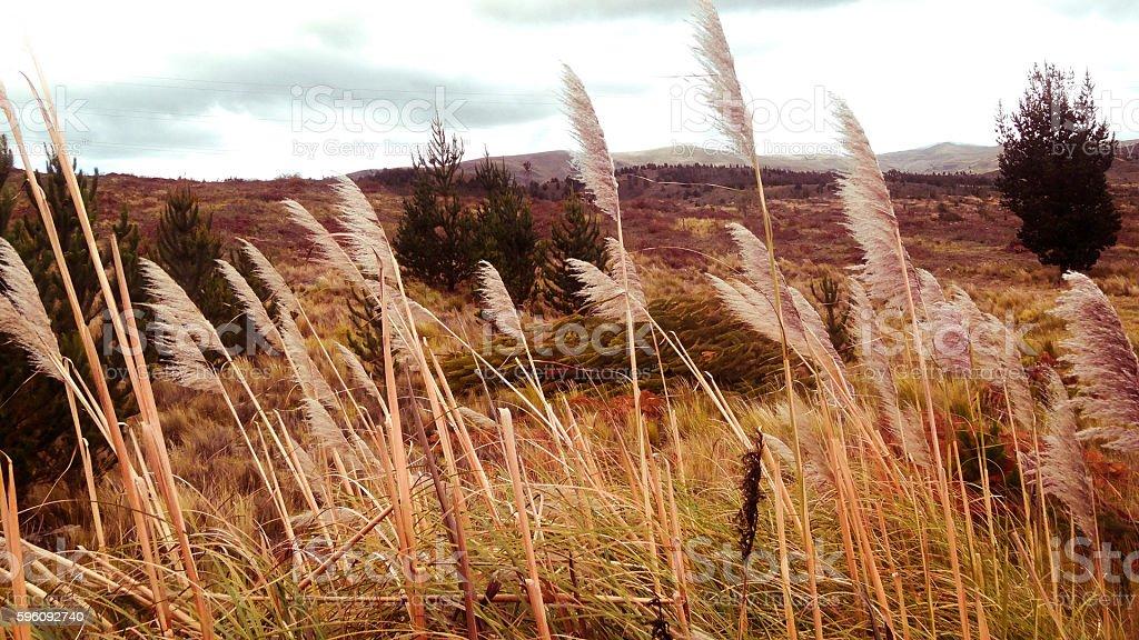 wheatfields royalty-free stock photo