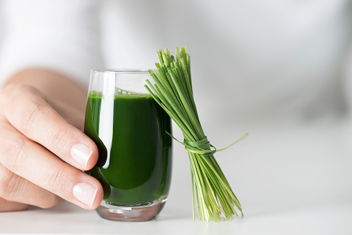 Female hand is holding a glass of wheatgrass juice with wheatgrass leant to the glass.