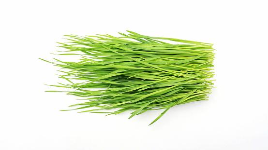 wheatgrass plant on a white background.