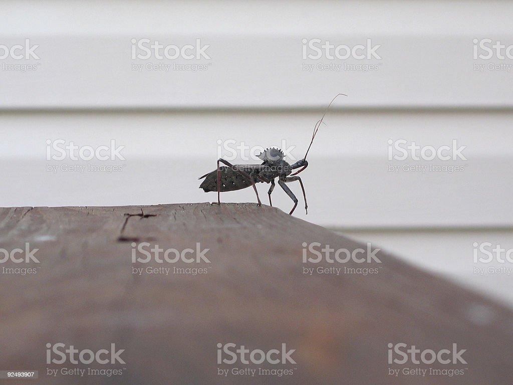 Wheel Bug - Assasin royalty-free stock photo