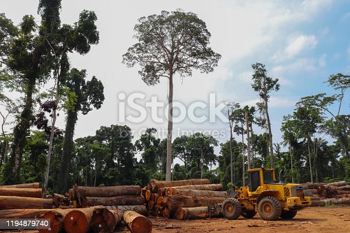Wheel loader arranging piles of native wood logs extracted from the Brazilian Amazon rainforest region in a stockyard