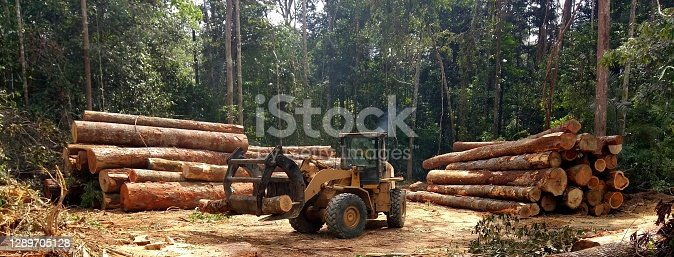 istock Wheel loader tidying the piles of wood logs 1289705128
