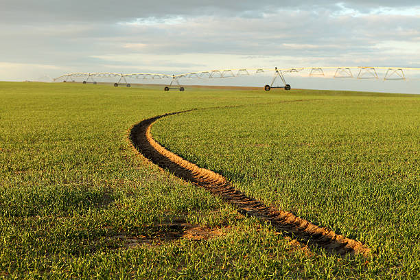 Wheel track from and agricultural sprinkler in a farm field stock photo