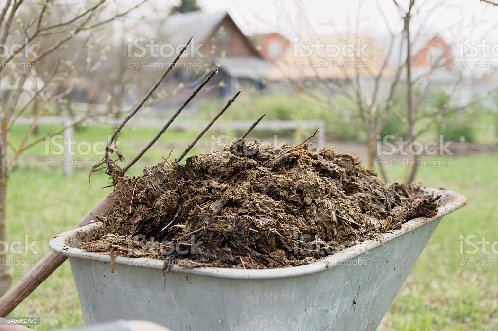 Wheelbarrow full of manure stock photo