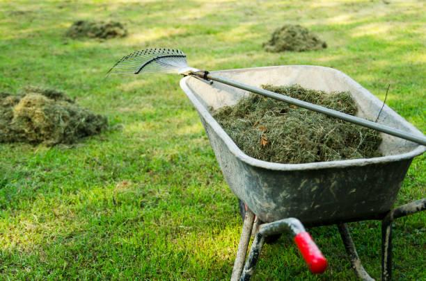 kruiwagen met verse lading gemaaid gras op het gazon. - kruiwagen met gereedschap stockfoto's en -beelden