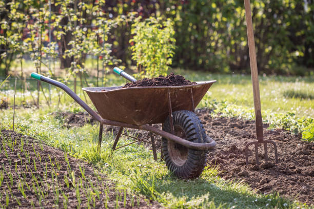 Wheelbarrow with organic compost and pitchfork stock photo