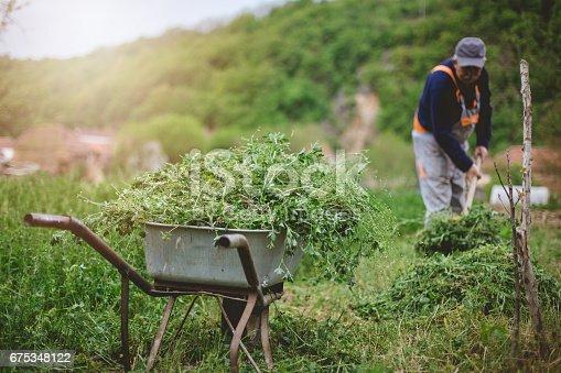 istock Wheelbarrows full of grass 675348122