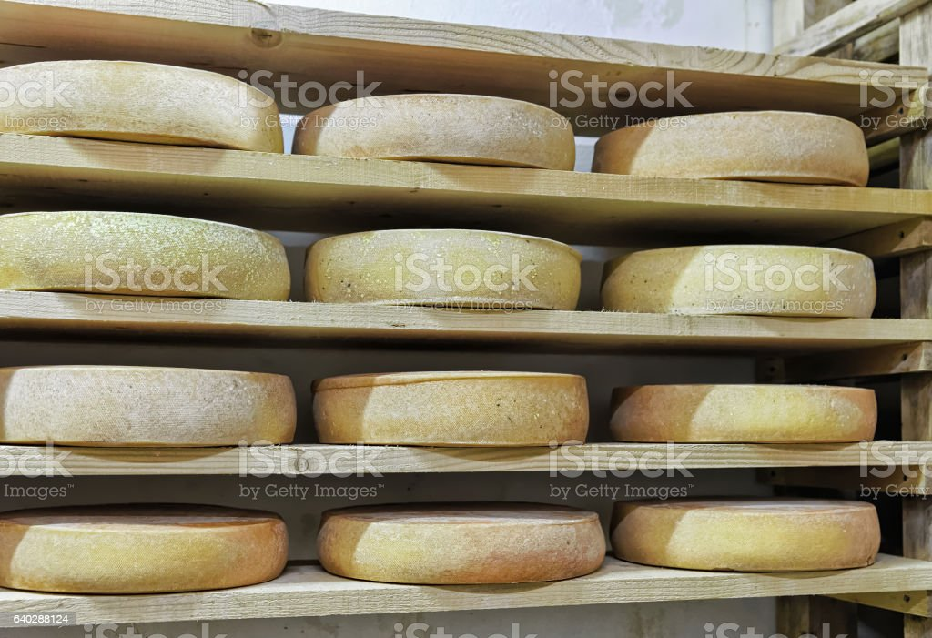 Wheels of aging Cheese in maturing cellar dairy Franche Comte stock photo
