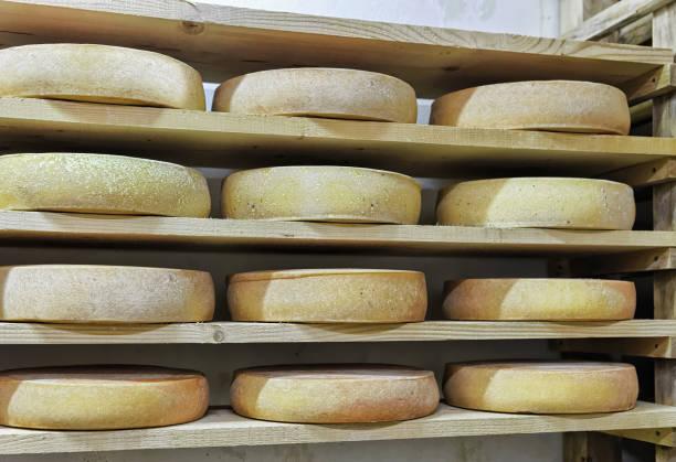 wheels of aging cheese in maturing cellar dairy franche comte - ser comte zdjęcia i obrazy z banku zdjęć