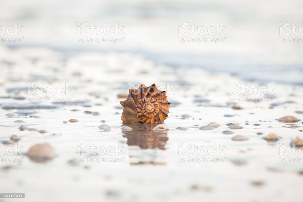 Su salyangozu deniz hayvanı kabuğu stok fotoğrafı